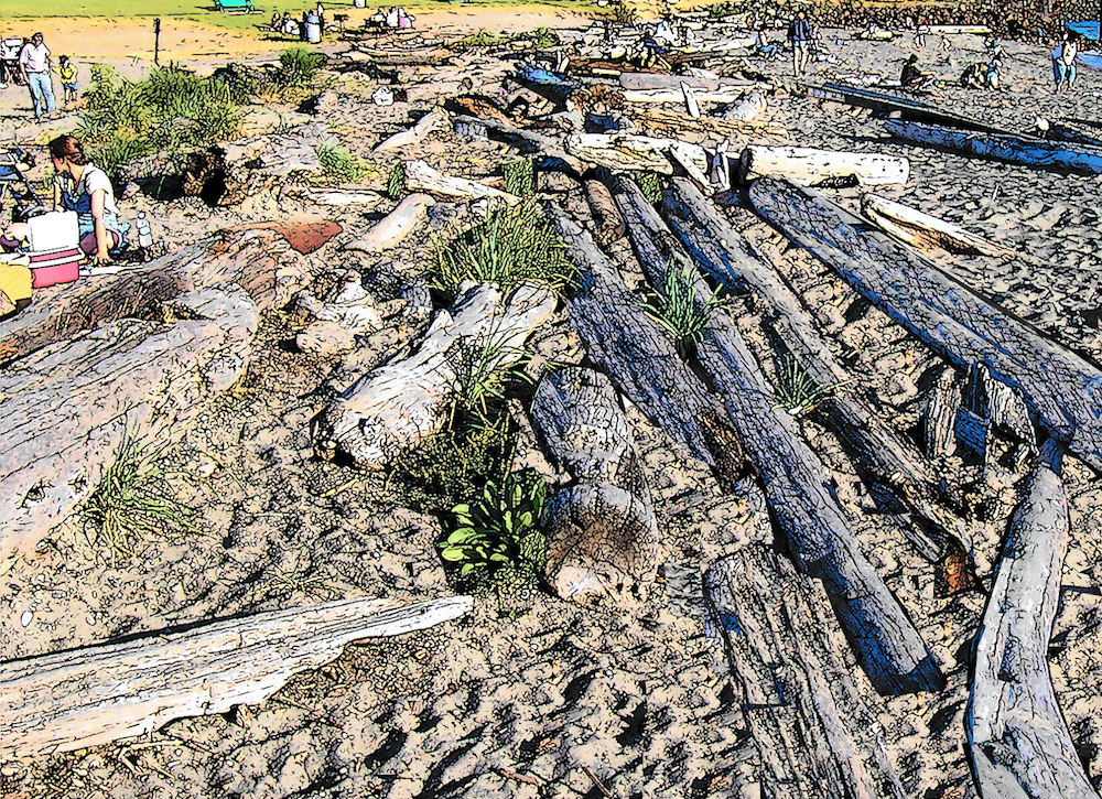 Old logs half buried in the sand.